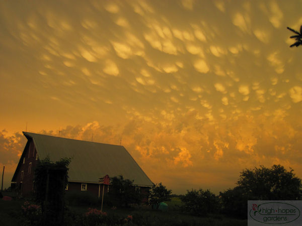mammatus over barn
