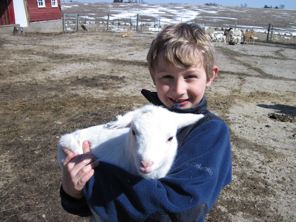 baby lamb and boy