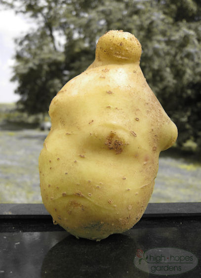 potato that looks like Buddha, potato buddha