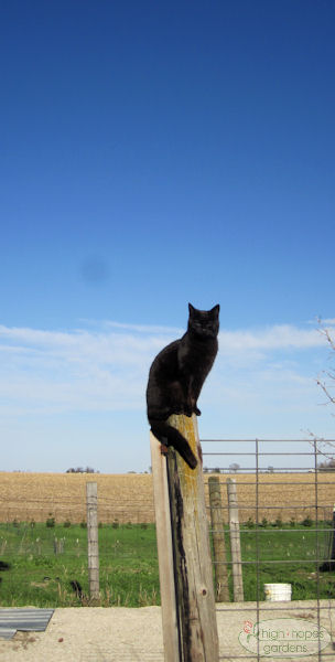 black cat on pole
