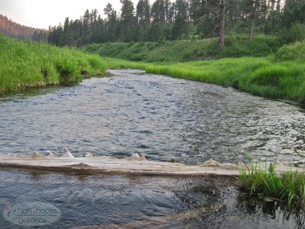 castle creek, black hills trout stream