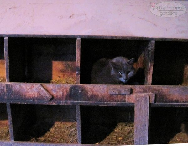 cat in nest box