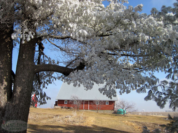 barn with hoarfrost trees