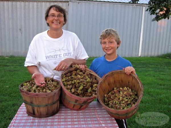 basket of hazelnuts