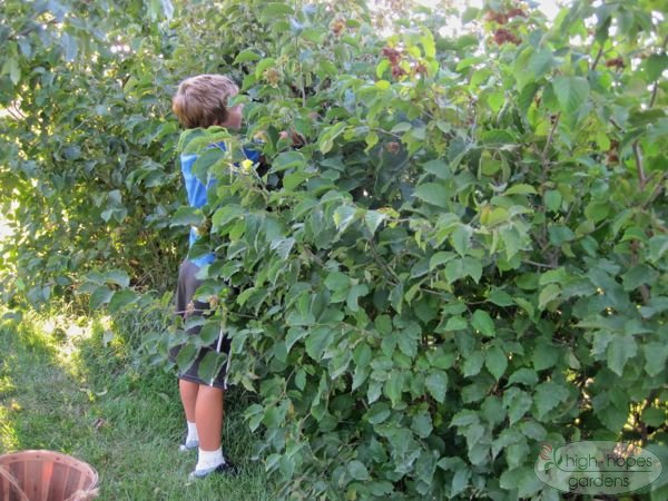 boy picking hazelnuts