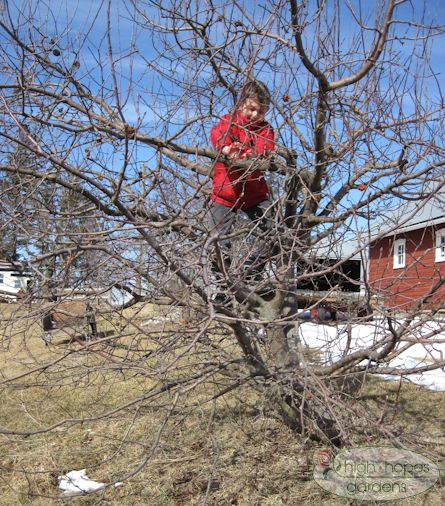 boy pruning tree
