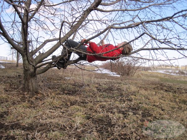 boy sleeping in tree