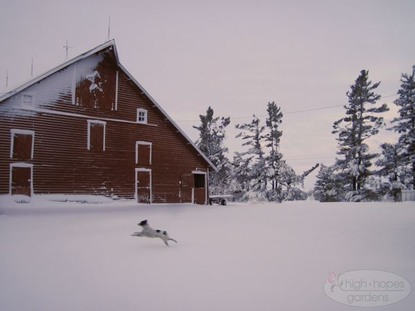 dog in snow by barn